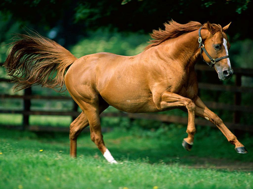 Light brown horse running - photo#2